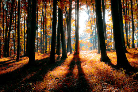 colorful indian summer forest Stock Photo - 8752333