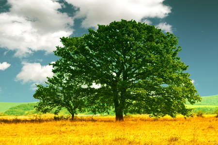 Lonely tree in the middle field Stock Photo - 8752327