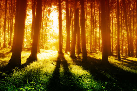 Colorful mystical forest  at evening  photo
