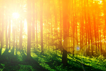 Colorful mystical forest with sun ray at morning Stock Photo - 8752314