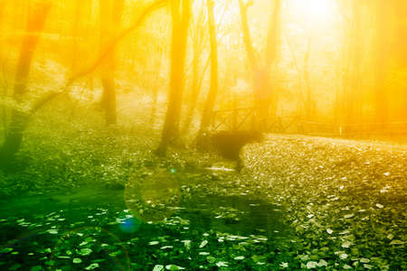 sunrise in the mystic  foggy forest Stock Photo - 8752308