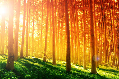 Colorful mystical forest with sun ray at morning Imagens