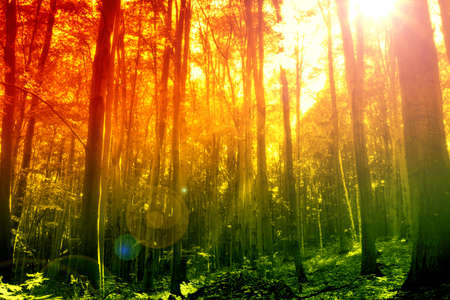 Mystical forest with sun ray Stock Photo - 8752324