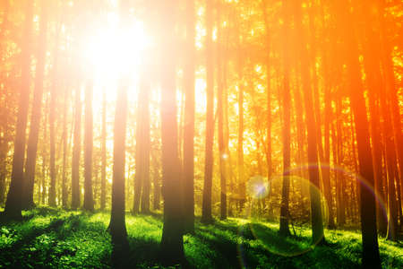 Colorful mystical forest with sun ray at morning Stock Photo - 8752322