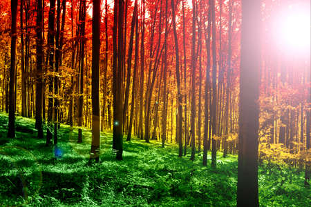 Colorful mystical forest with sun ray at morning Stock Photo - 8752315