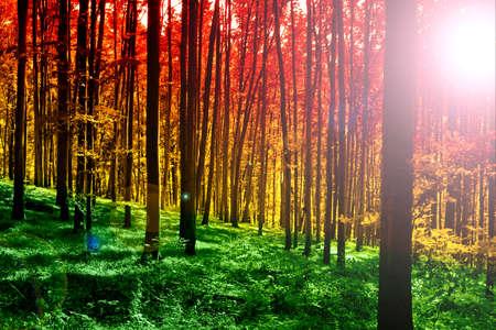 Forêt mystique coloré avec sun ray au matin Banque d'images - 8752315