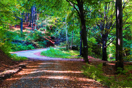 Sunshine in the green forest photo