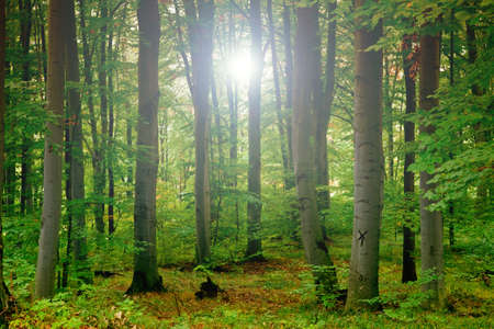 green forest Stock Photo - 9132416