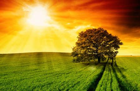 Eenzame boom tegen een blauwe hemel bij zonsondergang.  Stockfoto
