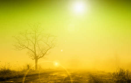 Misty sunrise with lonely tree in fog photo