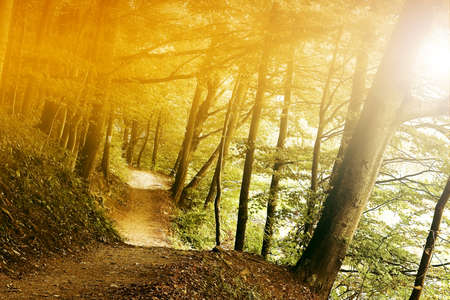 Sunlight in forest Stock Photo - 9344938