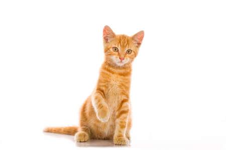 red cat Stock Photo - 9670559