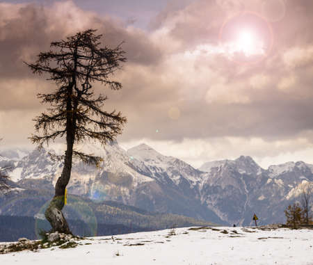 Single tree and Julian Alps landscape in Slovenia photo