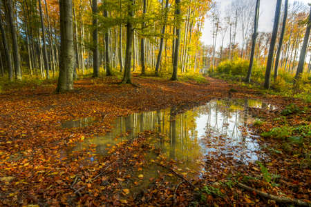 colorful autumn forest-his photo made by HDR technic photo