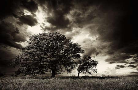 Lonely Tree Stock Photo - 16331590