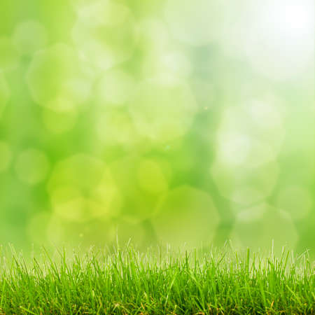 natural green grass background with selective focus bokeh lights photo