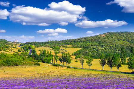 Lavender field in the summer in Tihany,Hungary photo