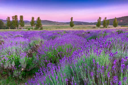 french countryside: Sunset over a summer lavender field in Tihany, Hungary- This photo make HDR shot Stock Photo