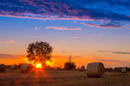 Sunset field, tree and hay bale in Hungary- this photo made by HDR technic  photo