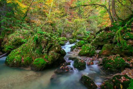 Creek deep in mountain forest  in Transylvania photo