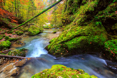 Creek deep in mountain forest  in Transylvania photo