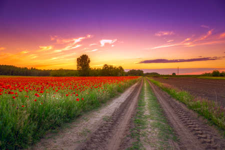 field with green grass and red poppies against the sunset sky  in Hungary- This photo make HDR technique photo