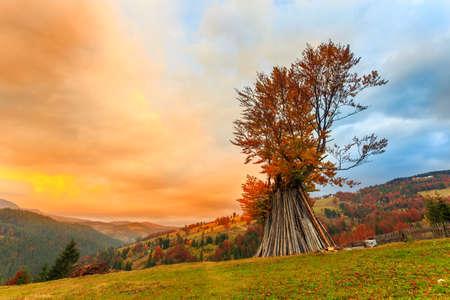 Autumn tree in mountain Carpathian, Romania photo