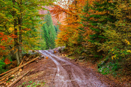 Footpath winding through colorful forest in Transylvania-Romania photo