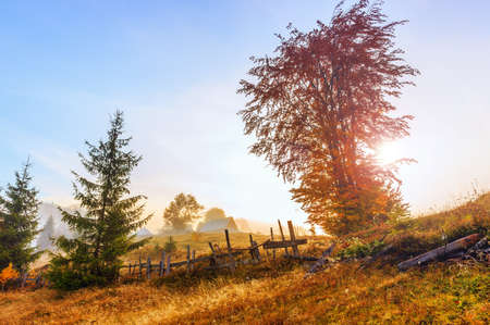 Magical sunrise with tree in Transylvania mountains photo