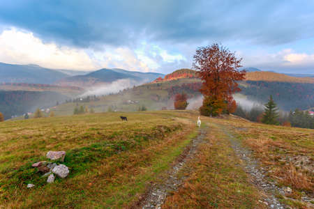 Foggy morning in Transylvania,Romania photo