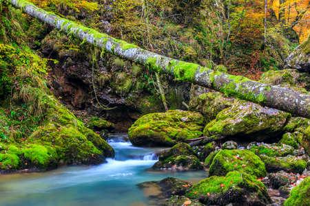 Creek deep in mountain forest in Transylvania,Romania photo