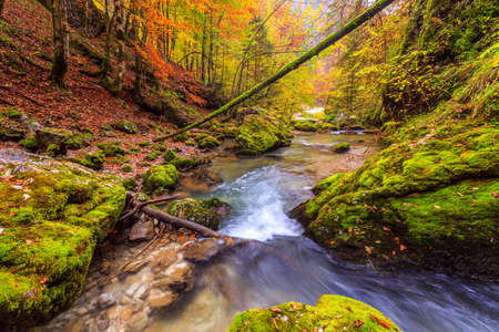 Creek deep in mountain forest in Transylvania,Romania photo