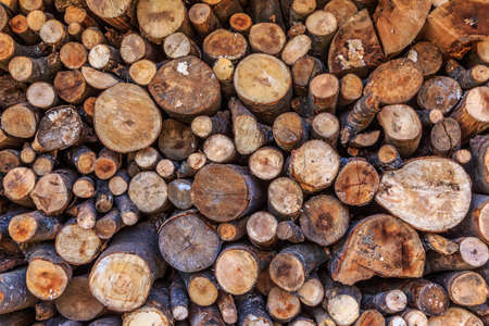 Background of dry chopped firewood logs in a pile photo
