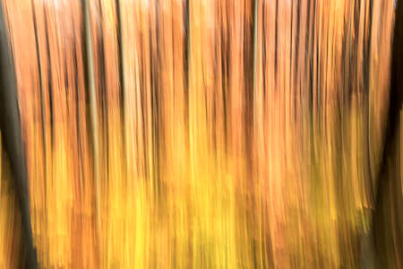 Abstract motion blur of trees in an autumn forest photo