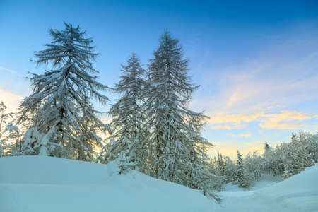 Winter forest in Alps near Vogel sky center in Slovenia, Europe. photo