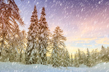 snowscape: Snowy winter forest in Slovenia, Europe Stock Photo