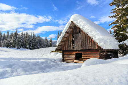 Winter landscape,pines and cottage covered with snow, Pokljuka, Slovenia photo