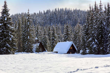 Winter landscape,pines and cottage covered with snow, Pokljuka, Slovenia Stock Photo