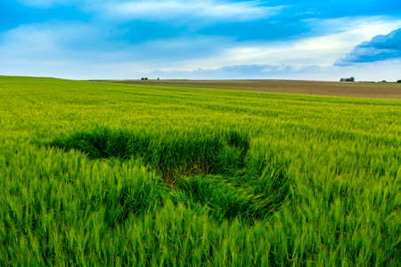 Green wheat field and blue sky photo