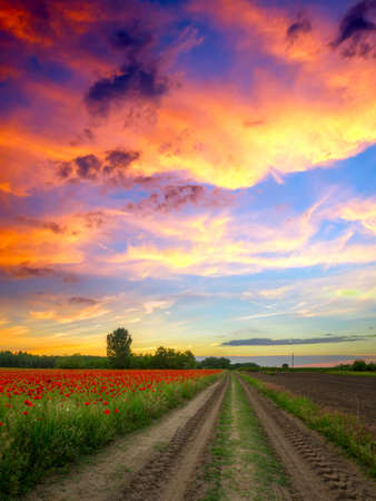 dirt road: Poppies field at sunset in summer, in Hungary