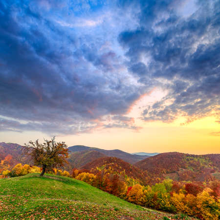 Lonely autumn tree  landscape in mountain Carpathian, Romania photo