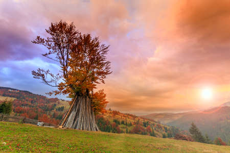 Dramatic sunrise. Lonely autumn tree hillside in Transylvania Romania photo