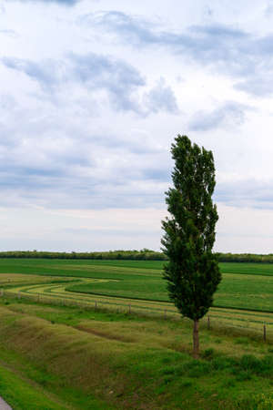 lone: Spring field wit lone tree Stock Photo