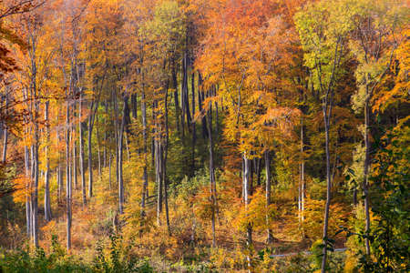 Kleurrijke herfst bos in Hongarije