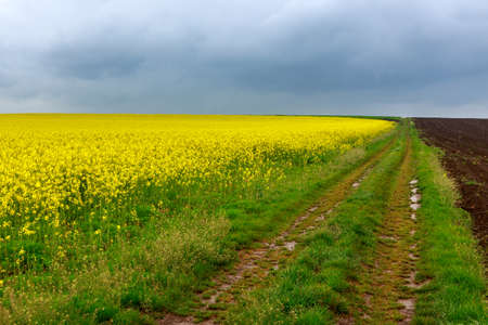 Dirt road and canola fields in Hungary photo
