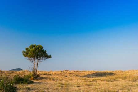 zakynthos: Tree in summer in Zakynthos island, Greece Stock Photo