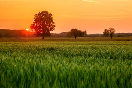 Spring meadow sunset in Hungary