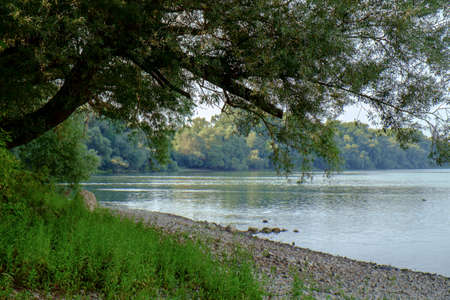 vac: Danube river in summer in Hungary