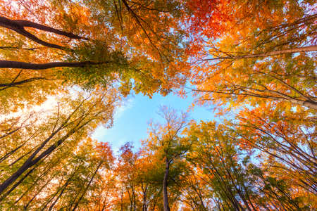 autumn: Autumn beech fall forest in Bukk-Hungary