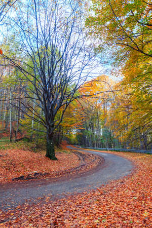 speedway park: Road in autumn beech landscape in Hungary